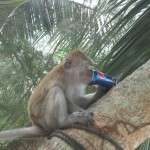 Apinalle maistuu Pepsi, Monkey Beach Petang