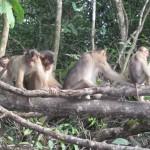 Apinaperhe Kinabatang-joella