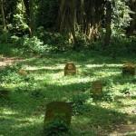 Apinoille oli jopa oma hautausmaa